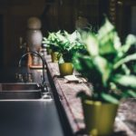 Plants by a kitchen sink