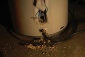 Sediment in a water heater tank